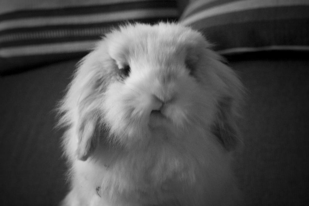 2009, 12-8 Daily Bunny