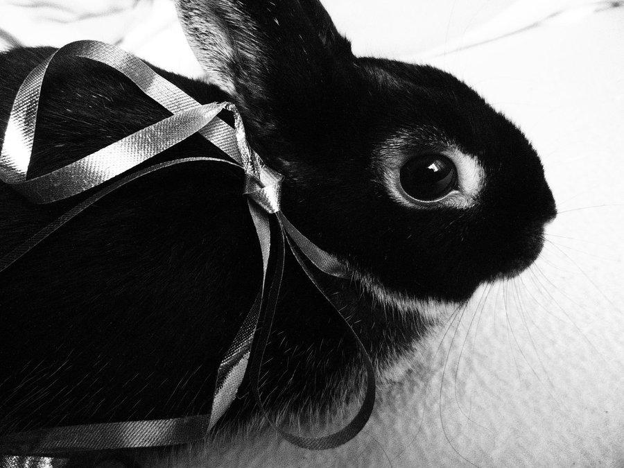 2009, 12-24 Daily Bunny