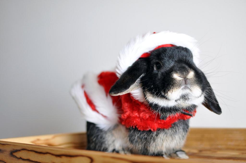 2009, 12-25 Daily Bunny.2