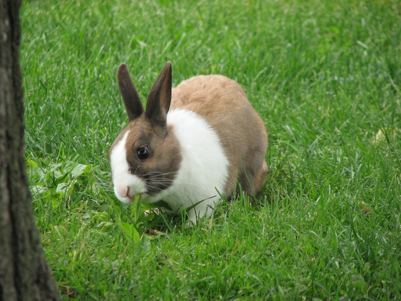 2009, 12-27 Daily Bunny