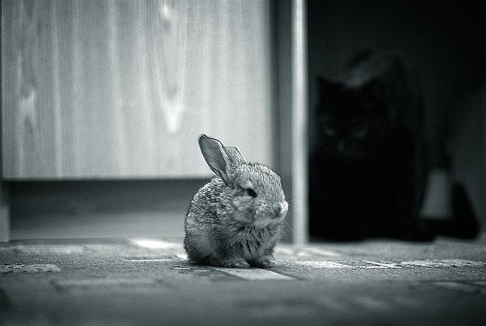 2009, 12-30 Daily Bunny