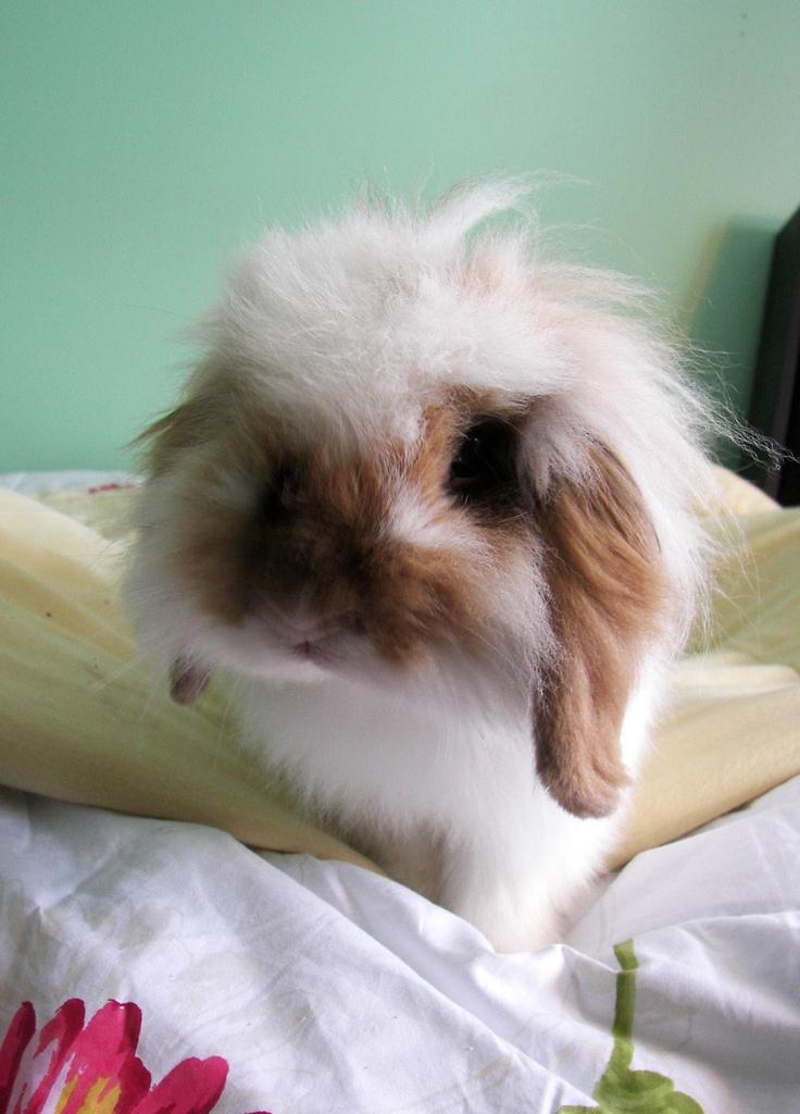 2010, 1-19 Daily Bunny