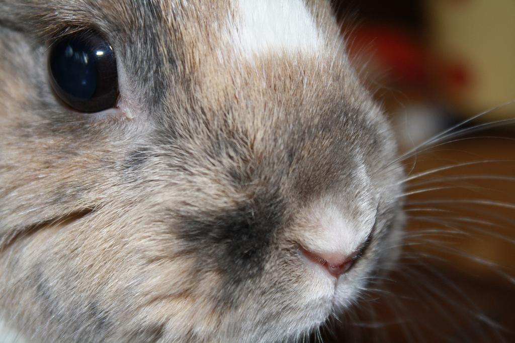 2010, 2-1 Daily Bunny