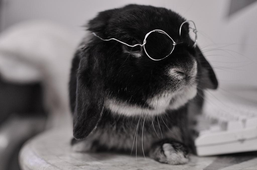 2010, 2-2 Daily Bunny