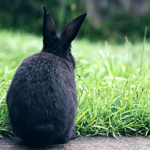 2010, 2-5 Daily Bunny