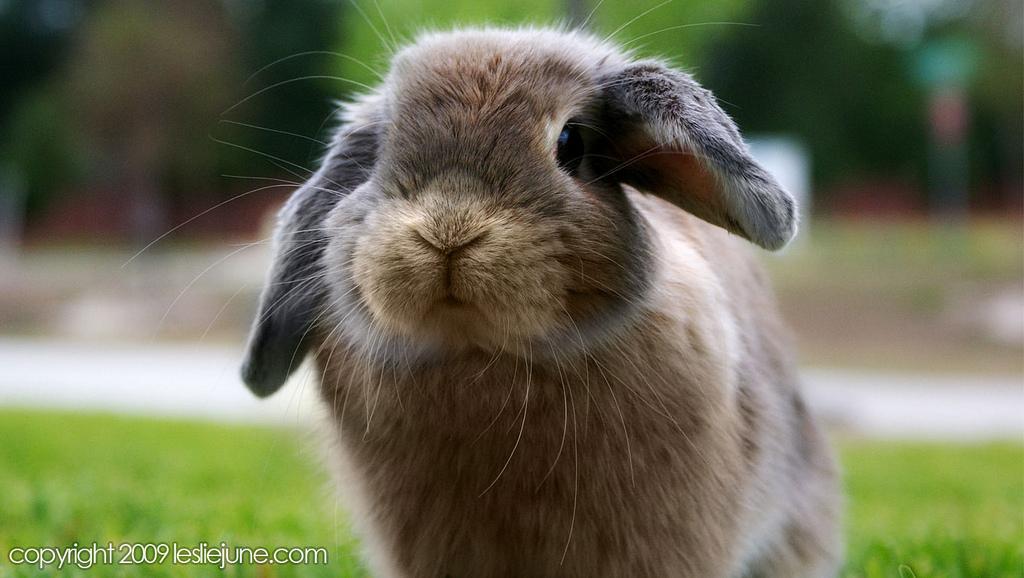2010, 2-10 Daily Bunny