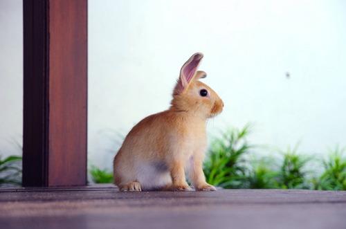 2010, 2-11 Daily Bunny