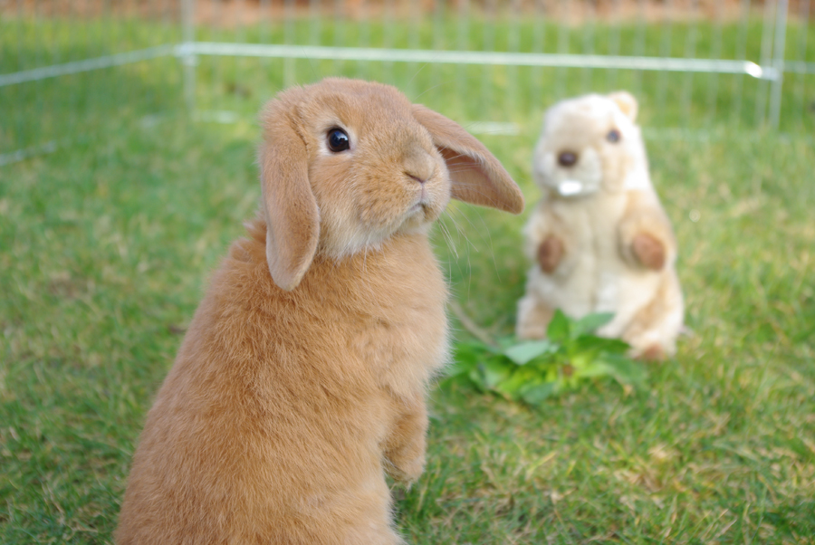 2010, 2-13 Daily Bunny