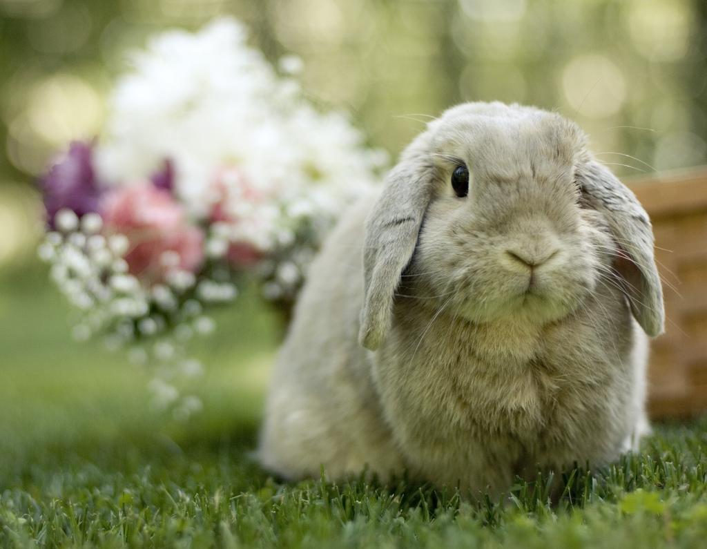2010, 2-24 Daily Bunny