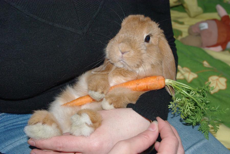 2010, 2-25 Daily Bunny