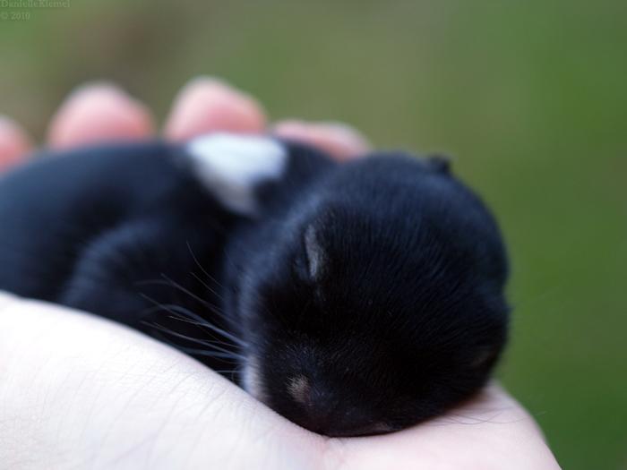 2010, 3-16.1 Daily Bunny