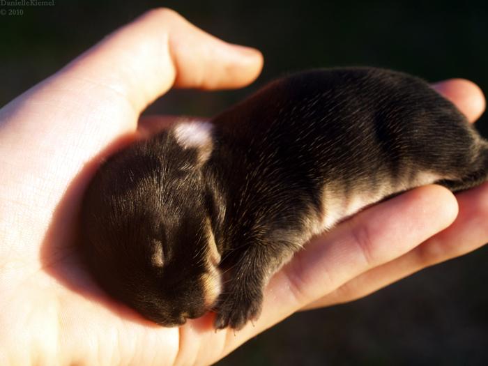 2010, 3-16.2 Daily Bunny