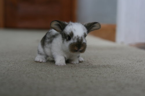 2010, 3-22 Daily Bunny