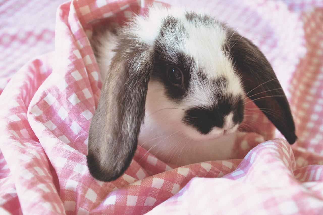2010, 3-23 Daily Bunny
