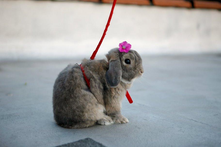 2010, 4-5 Daily Bunny