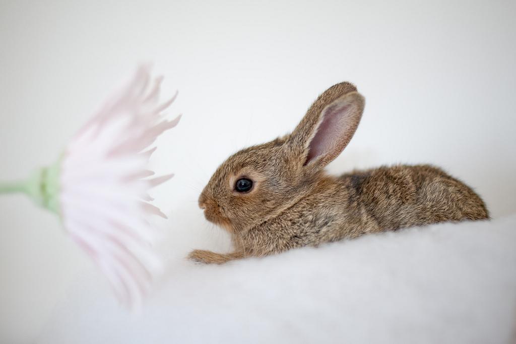 2010, 4-9 Daily Bunny
