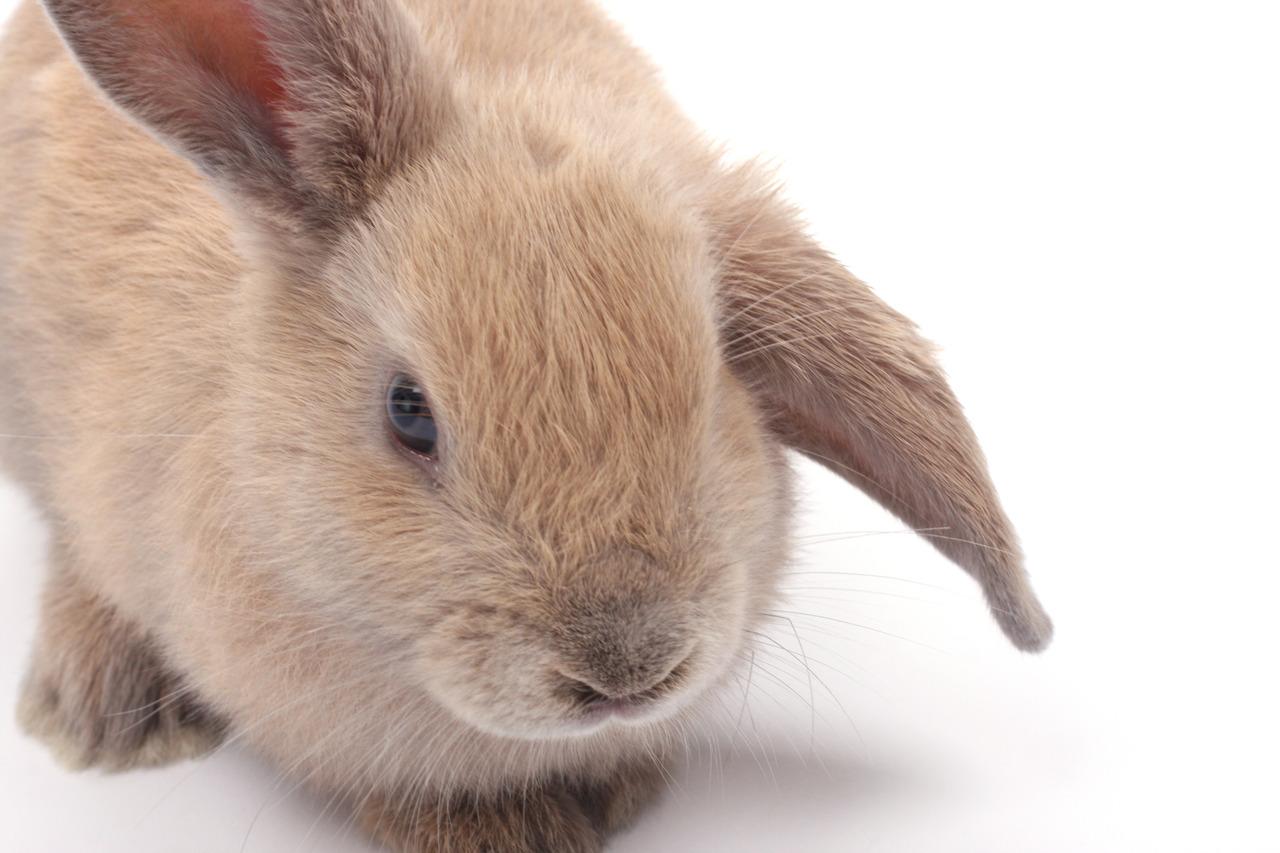 2010, 4-20.2 Daily Bunny