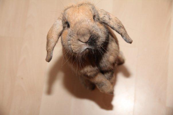 2010, 4-26 Daily Bunny