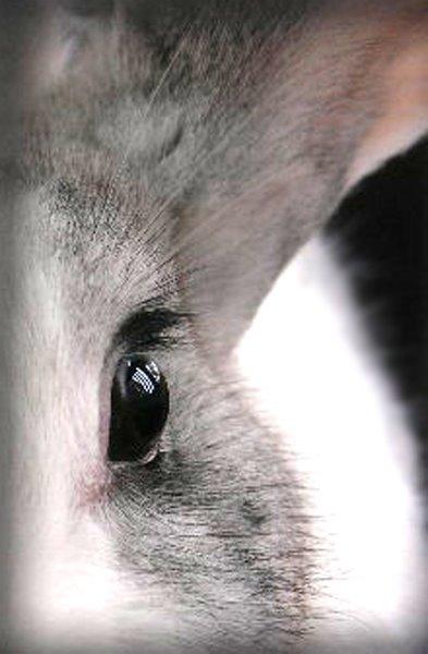 2010, 4-30 Daily Bunny