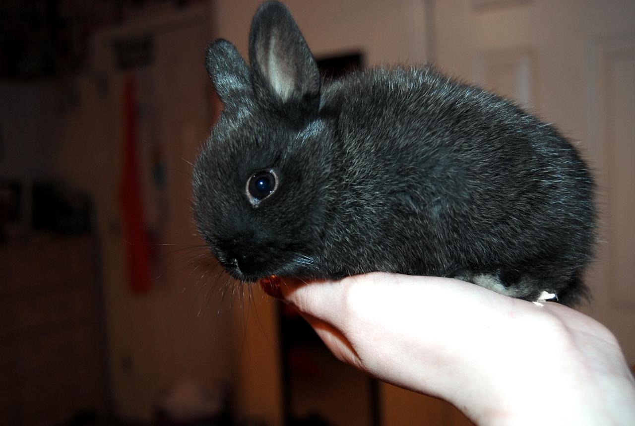 2010, 6-2 Daily Bunny