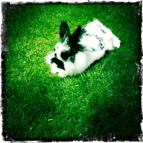 2010, 6-8 Daily Bunny