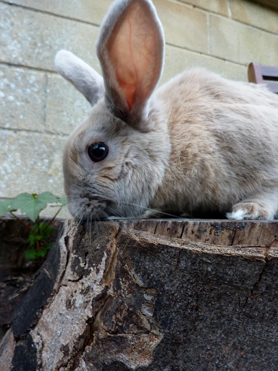 2010, 6-24 Daily Bunny
