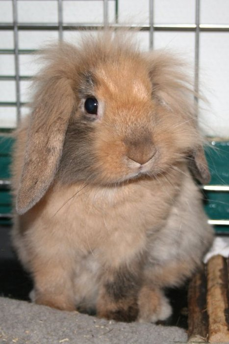 2010, 6-25 Daily Bunny