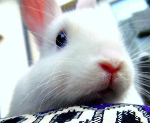2010, 7-3 Daily Bunny