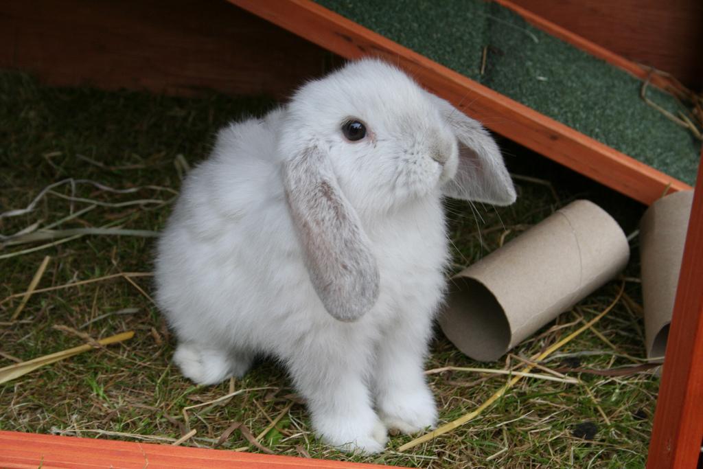 2010, 7-7 Daily Bunny