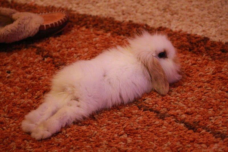 2010, 7-20 Daily Bunny