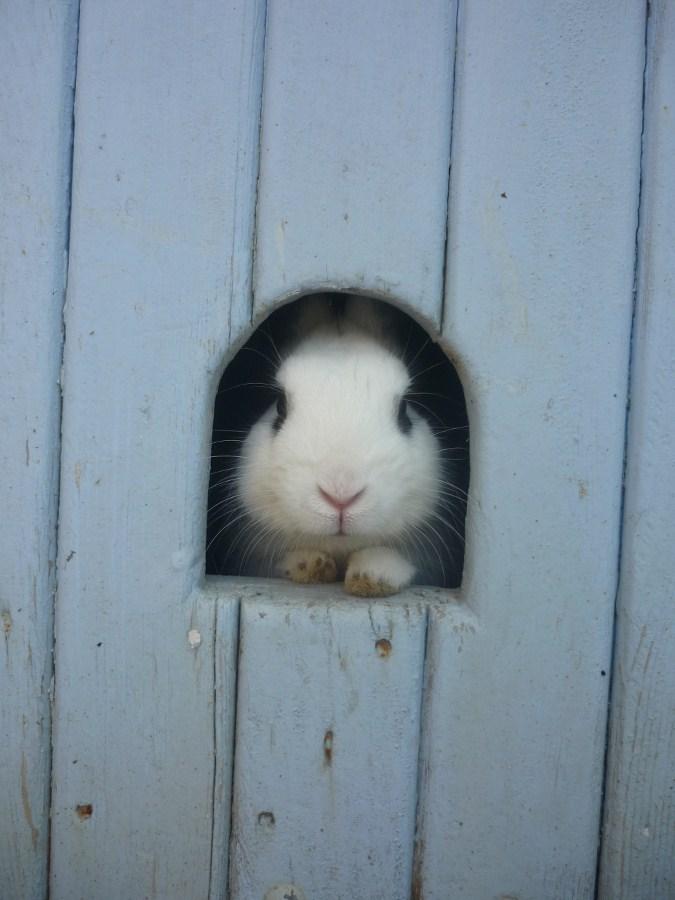 2010, 7-25 Daily Bunny