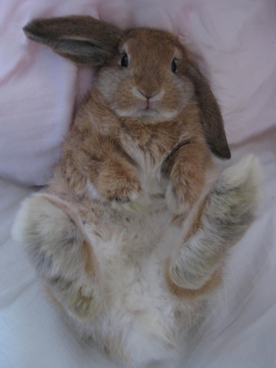 2010, 7-27 Daily Bunny