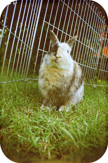 2010, 7-31 Daily Bunny