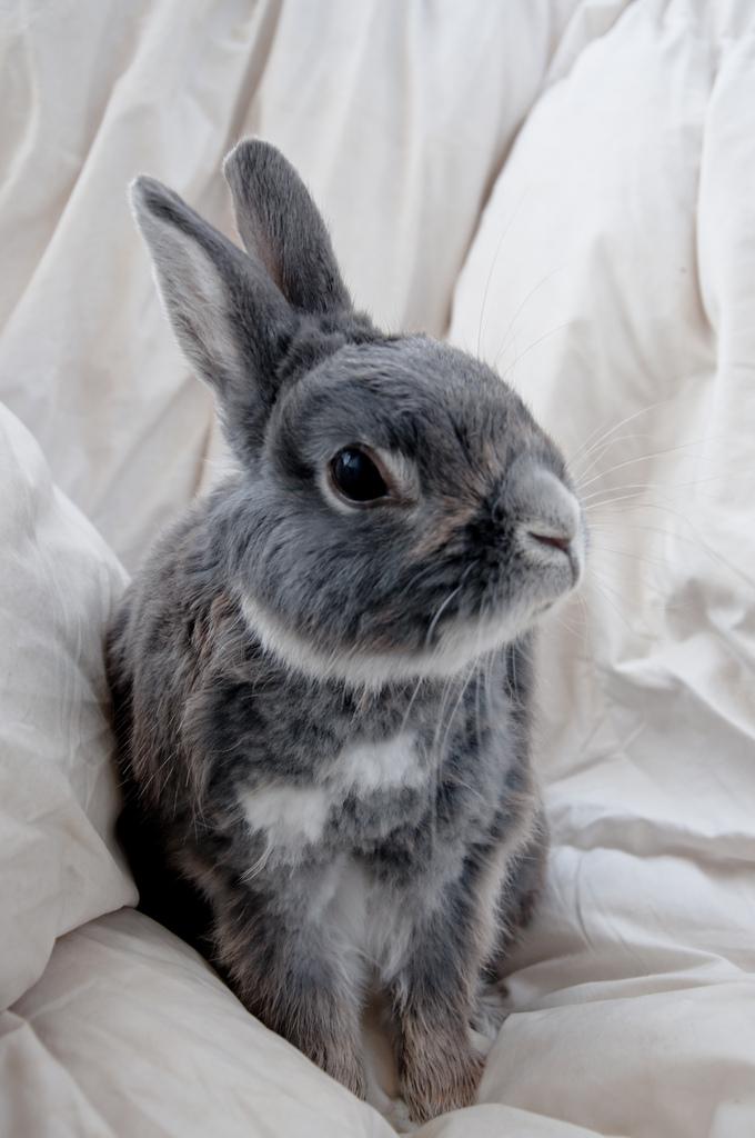 2010, 8-2 Daily Bunny