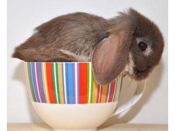 2010, 8-4 Daily Bunny
