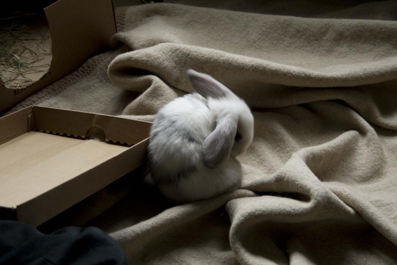 2010, 8-22 Daily Bunny