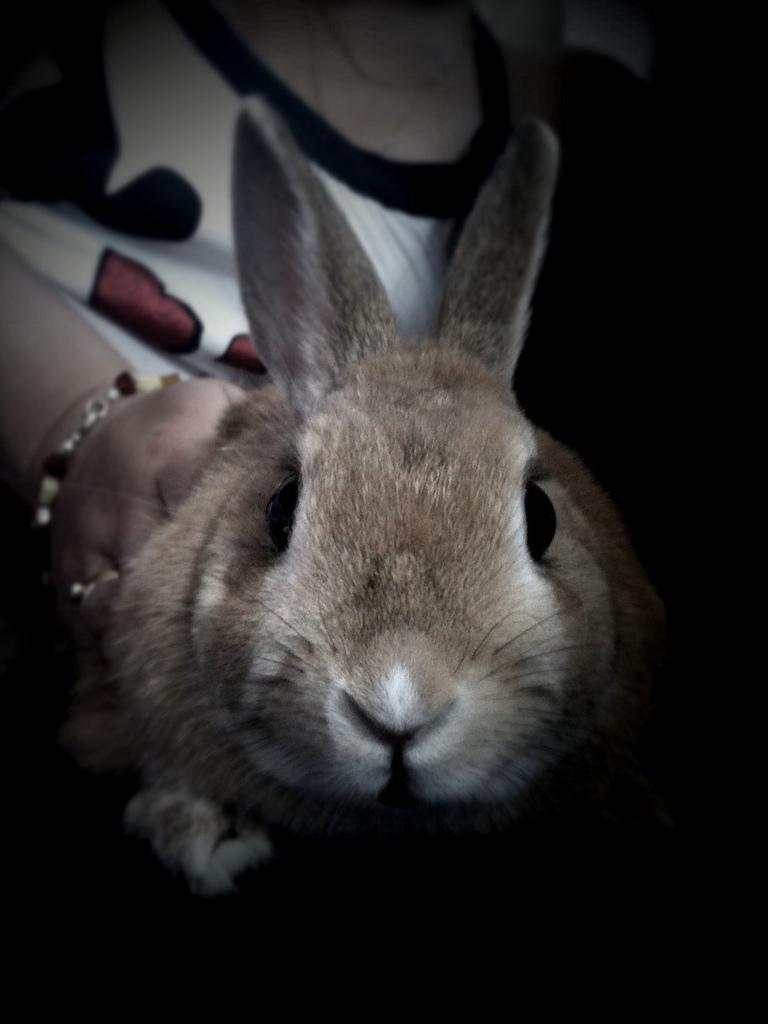 2010, 8-23 Daily Bunny