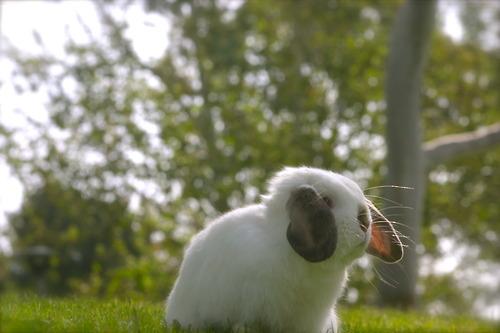 2010, 8-30 Daily Bunny