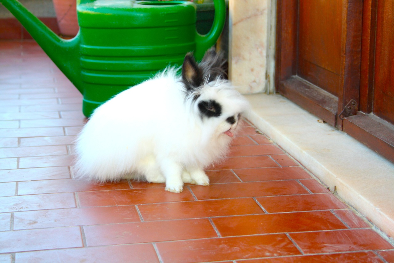 2010, 9-5 Daily Bunny