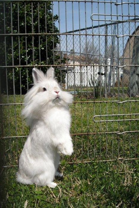 2010, 9-29 Daily Bunny