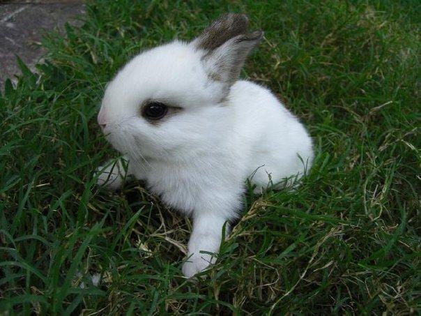 2010, 10-3 Daily Bunny