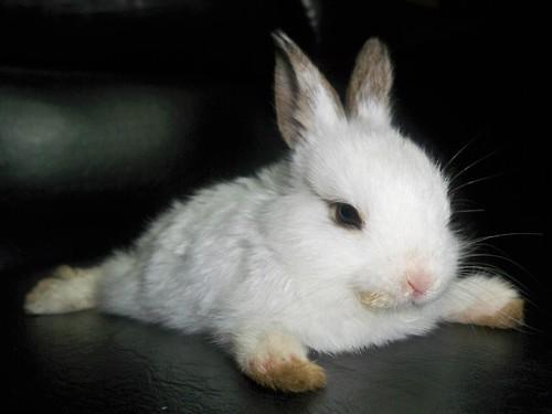 Bunny Has a Floor