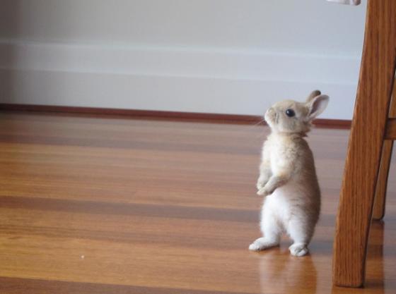 Standing Bunny