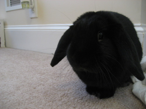 Basement Bunny Comes Out for Bunday