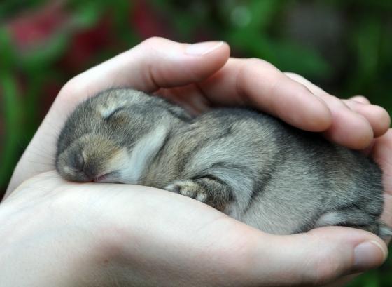 Palmful of Snoozing Bun