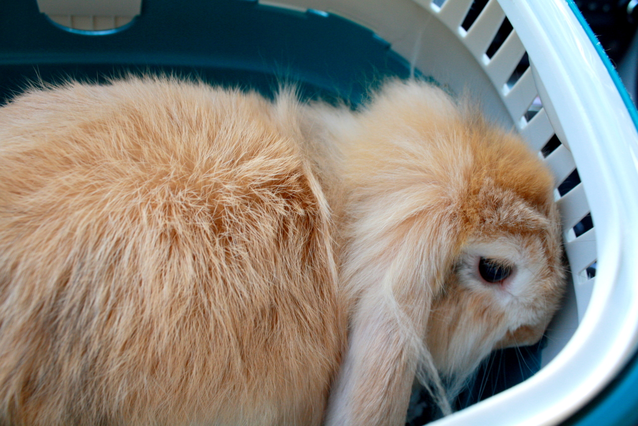 Bunny Stows Away in Laundry Basket