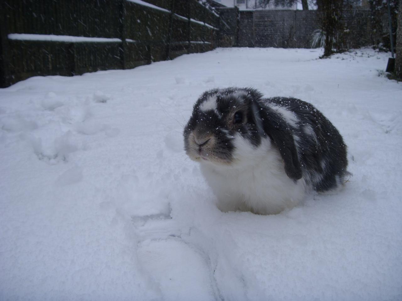 It's Snowing on Bunny