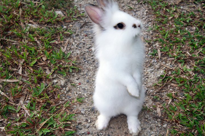 Bunny Explores the Great Outdoors