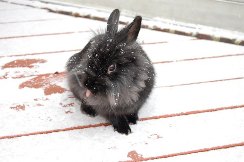 Bunny Catches Snow on His Tongue