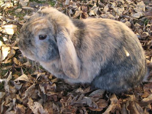 Bunny Camouflage